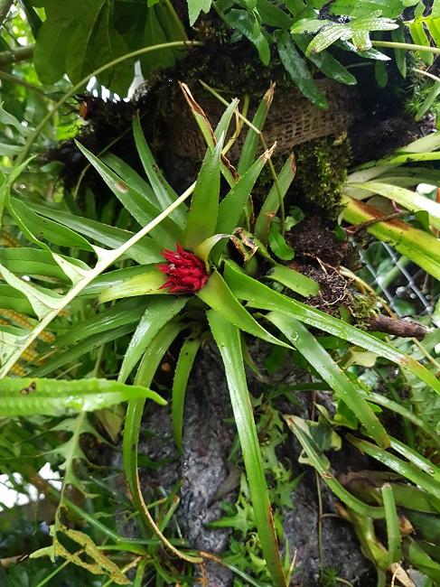 Support à épiphytes et broméliacées rustiques Suppor27