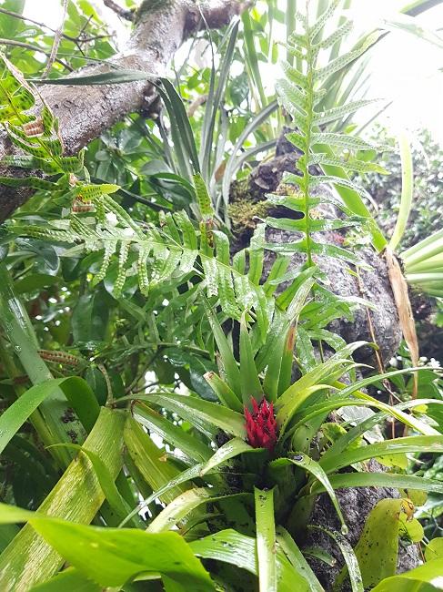 Support à épiphytes et broméliacées rustiques Suppor28
