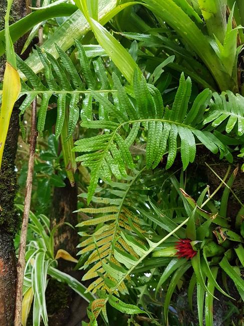 Support à épiphytes et broméliacées rustiques Suppor31