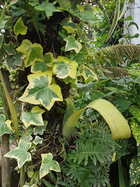 Support à épiphytes et broméliacées rustiques - Page 2 Suppor36