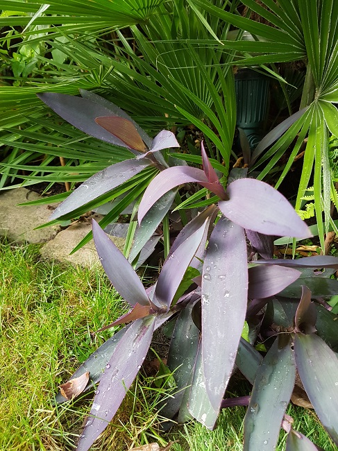 Mon (tout) petit jardin en mode tropical Trades10