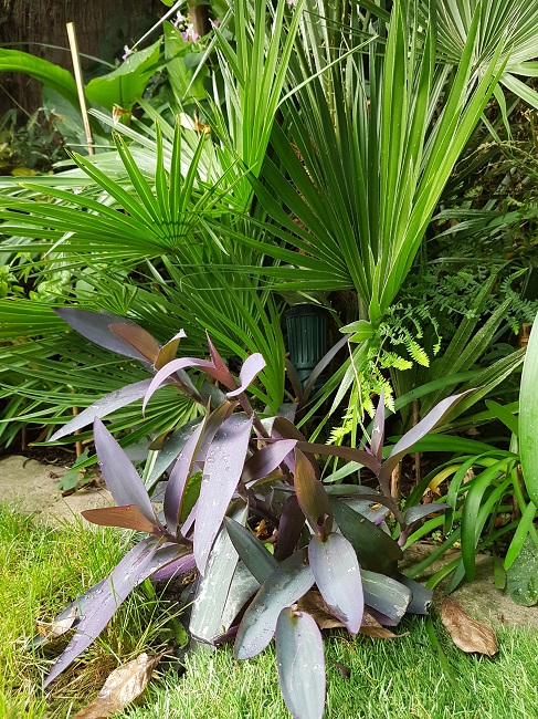 Mon (tout) petit jardin en mode tropical Trades11
