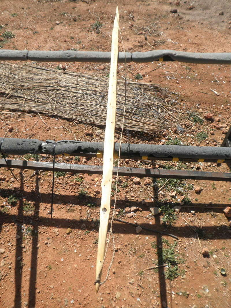 Tutorial arco de vara de almez/arco para Zorro - Página 3 P3170324