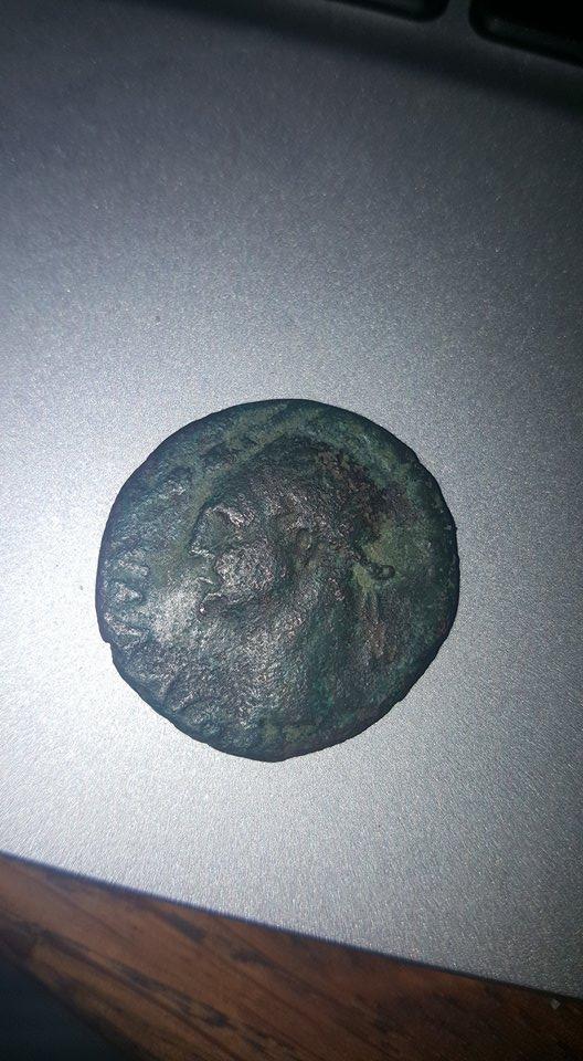 id romaine  23666410