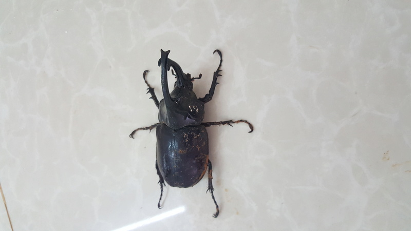 insecte a donner espece rare!!! 20171113