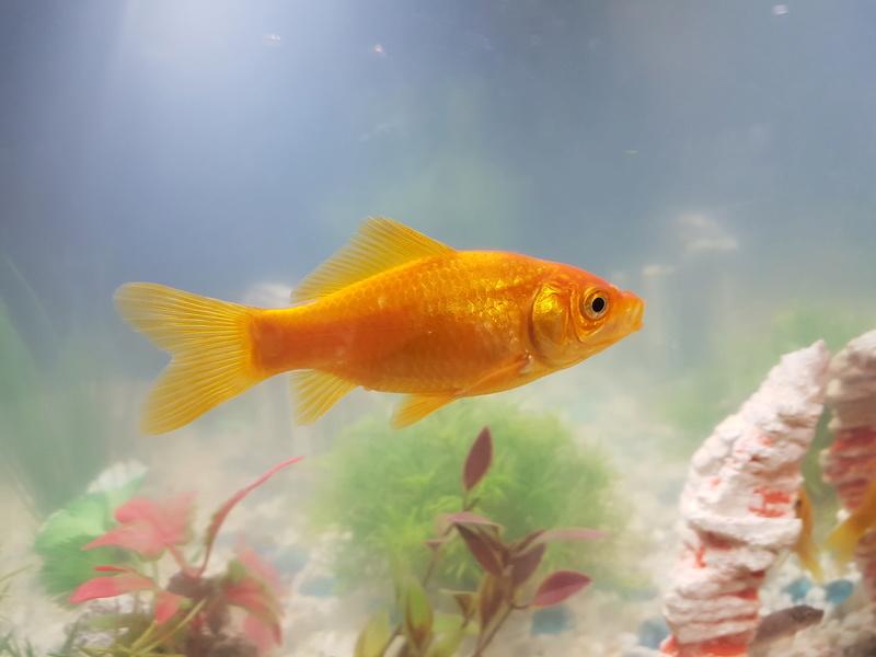 l'eau de mon aquarium est blanche 20171115