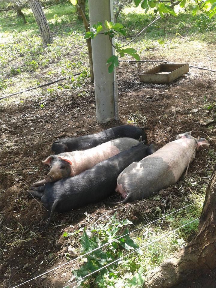 Condividete le foto dei vostri amici animali - Pagina 2 12998710