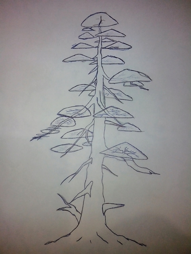 Juniperus stricta formación en chokkan Img_2010