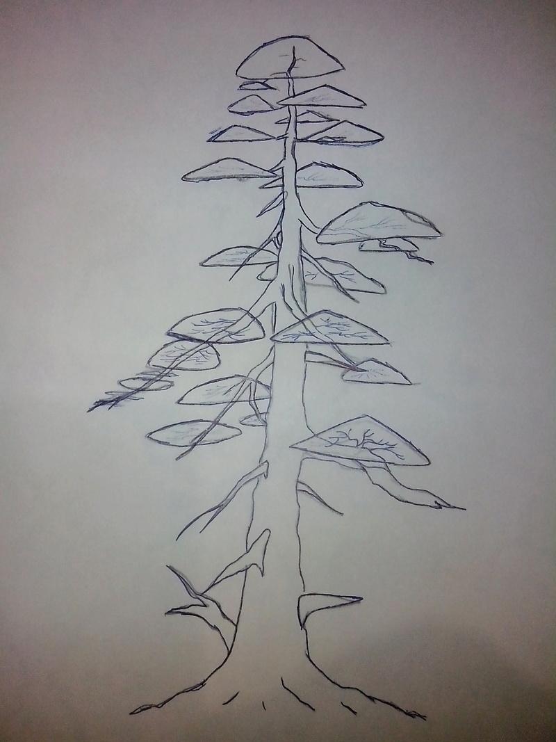 Juniperus stricta: formación en chokkan Img_2017