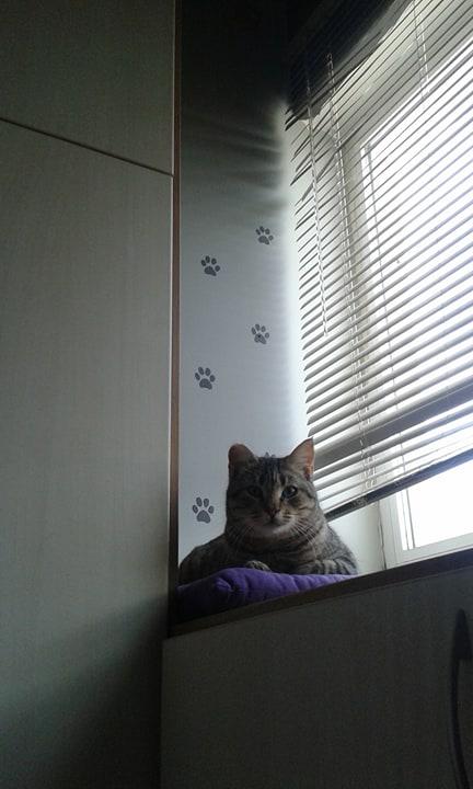 Στρουμπουλή τιγρίτσα με άπαιχτο χαρακτήρα ψάχνει σπίτι! 25463611