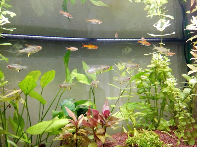 125L Juwel Rio Amazonien - Page 2 Img_2011