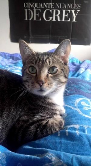 NIKEL, chat mâle tigré, né le 22 mai 2017 26755212