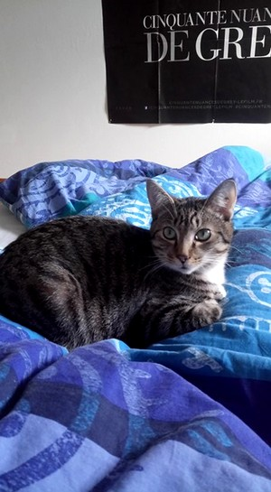 NIKEL, chat mâle tigré, né le 22 mai 2017 26794111