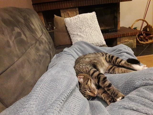 NIKEL, chat mâle tigré, né le 22 mai 2017 28535910