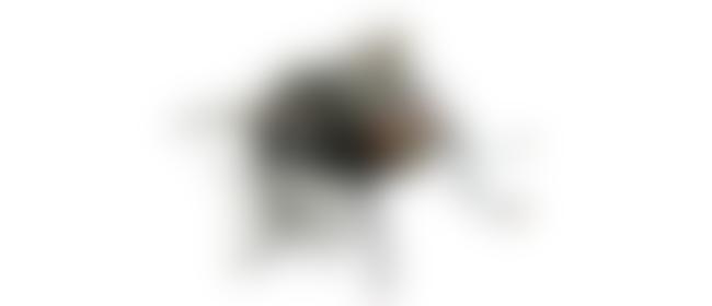 Pogodi šta je na slici 3177811