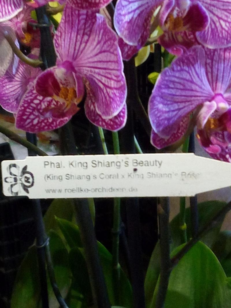 Phalaenopsis Ambotris??? Img_2028