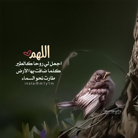 جمعتكم مباركة ان شاء الله - صفحة 17 13696410