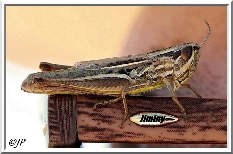 Jiminy Criquet 23510