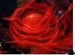 Seita de Sangue - [Império de Marfim] Blood_10