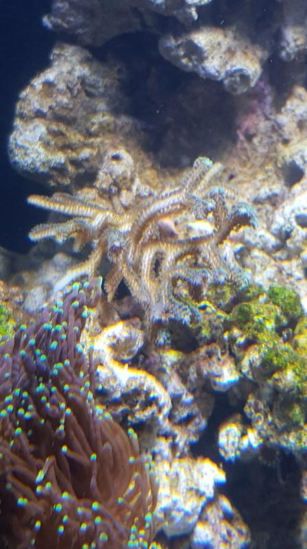 Reefer  425xl de lolyju 20171213
