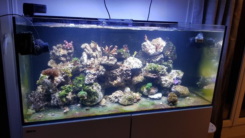 Reefer  425xl de lolyju 20171226