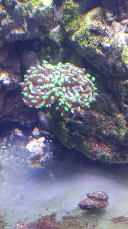 Reefer  425xl de lolyju 20171229