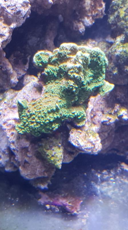 Reefer  425xl de lolyju 20171230