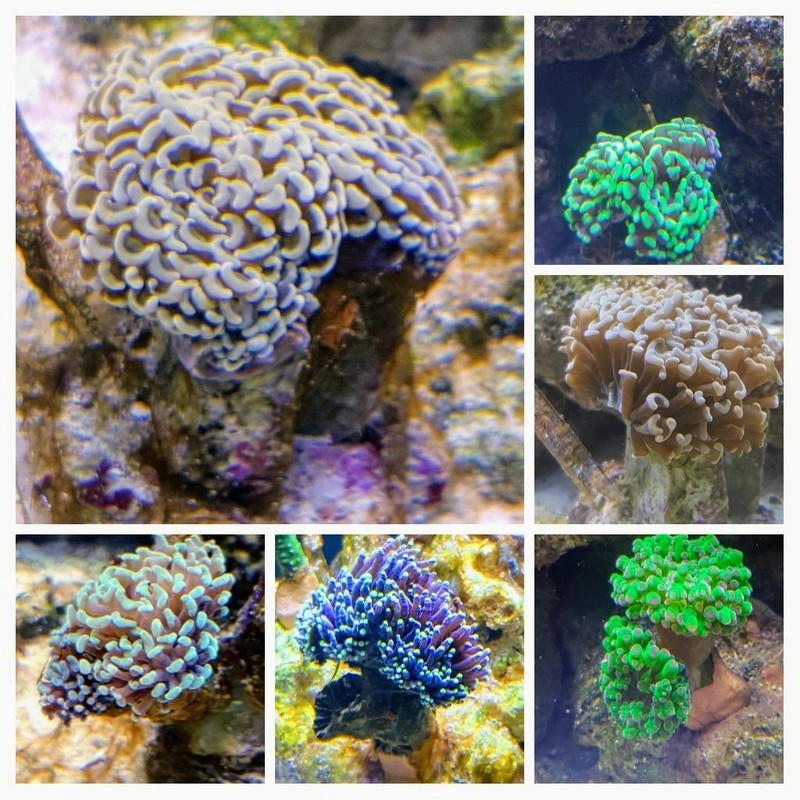 Reefer  425xl de lolyju 20180110