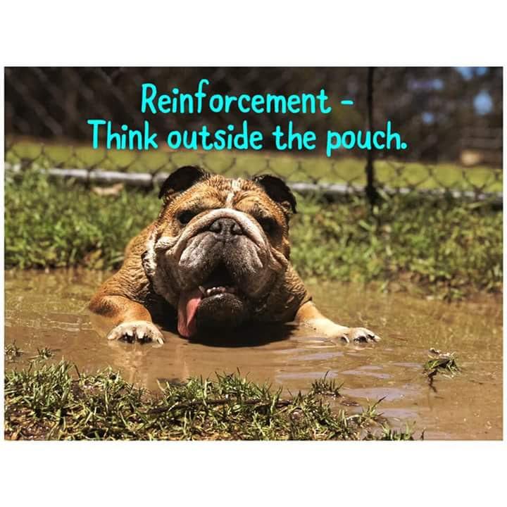 Récompenser un chien sans caresses, friandises ou jeux: conseils? - Page 3 Fb_img10