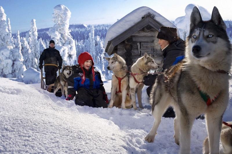 Хаски, олени и лошади будут катать посетителей восьми парков Москвы Laplan10