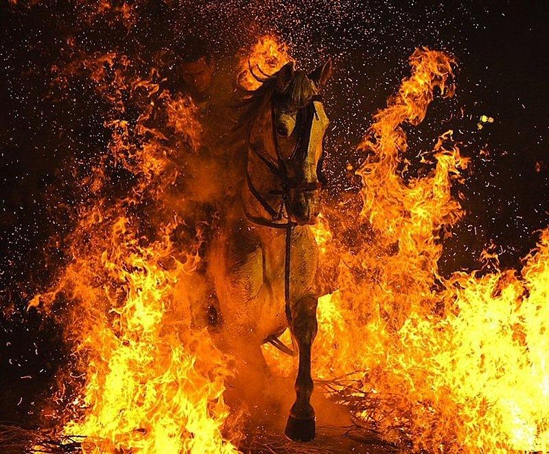 18 января в Испании празднуют День Святого Антонио — покровителя животных. Y_febc10