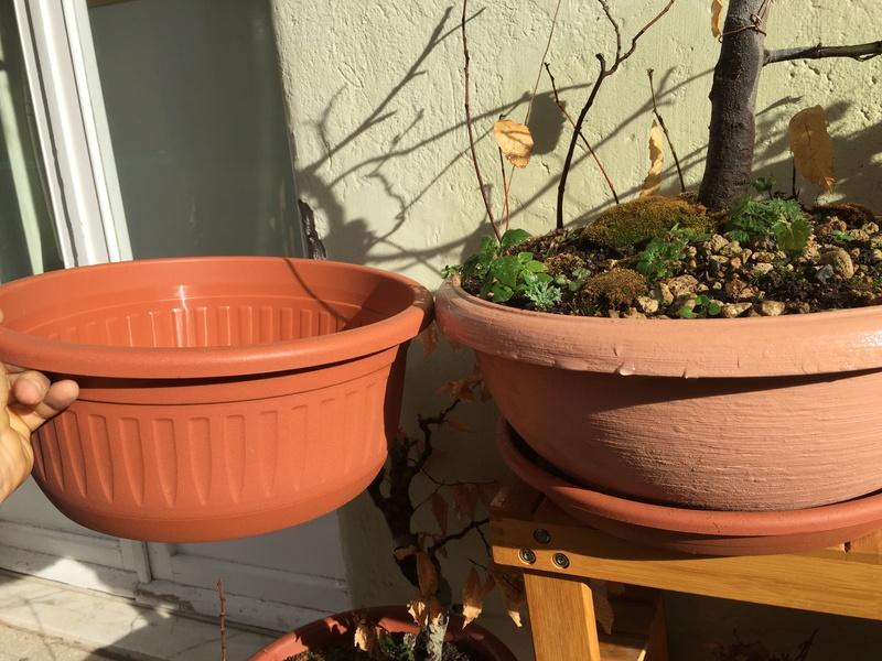 castagno in ciotola quale vaso questa primavera? Img_1710