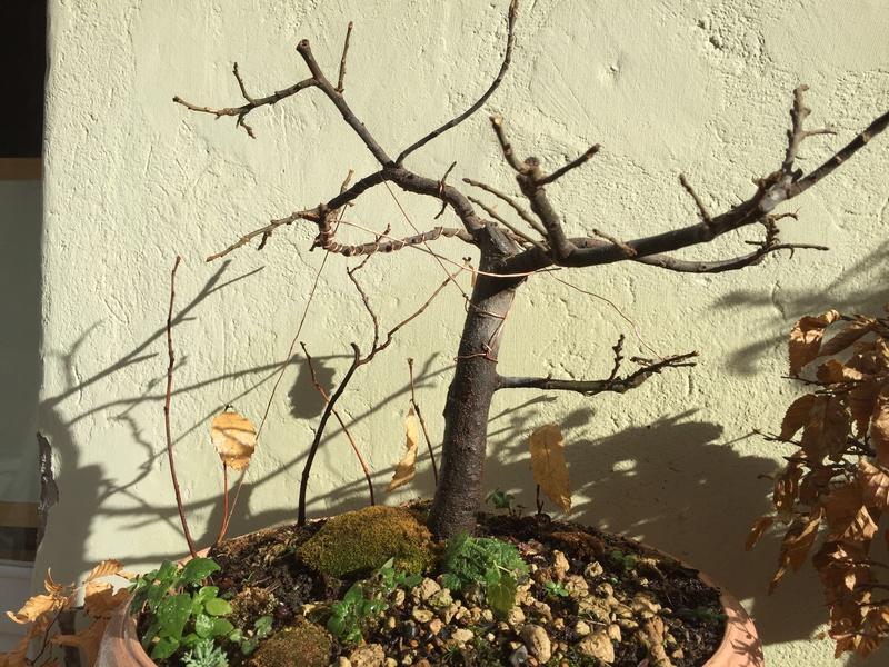 castagno in ciotola quale vaso questa primavera? Img_1715