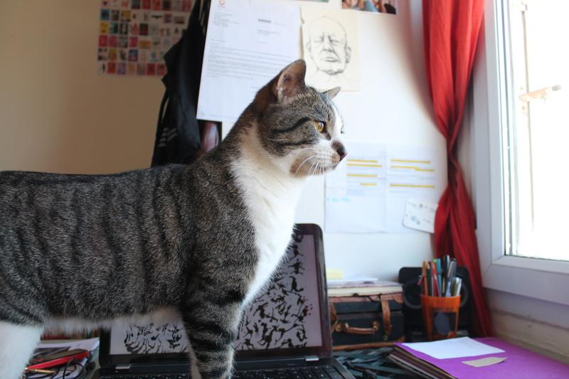 iaki - IAKI, mâle européen gris Tabby et blanc, né en novembre 2013 Img_2710