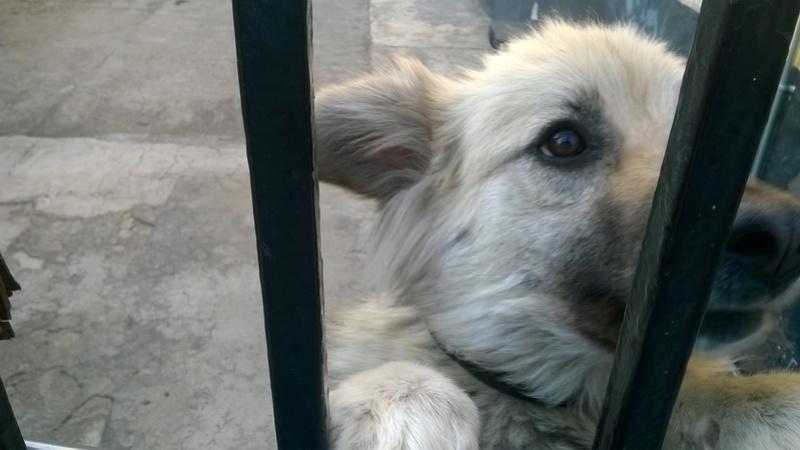 Fotos de animales de todo tipo incluyendo mascotas que más te gustan - Página 5 Perrit10