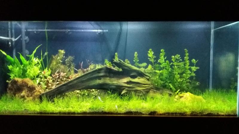 aquário plantado (~150 litros). - Página 2 Foto_210