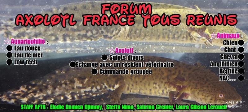 Axolotl France Tous Réunis
