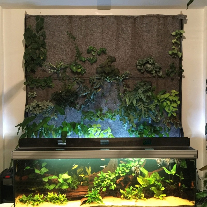 700 litres + mur végétal Img_6510