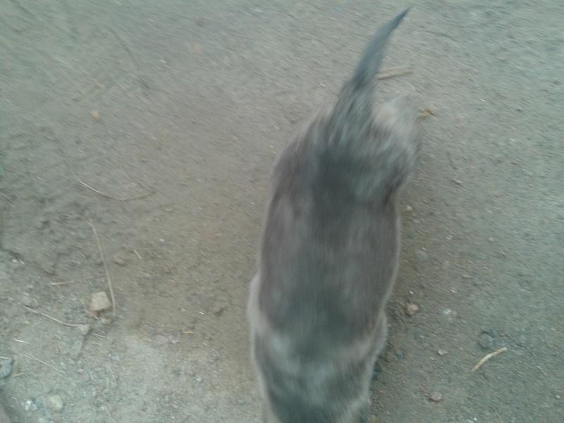 quelle et la rase de mon chien  20171211