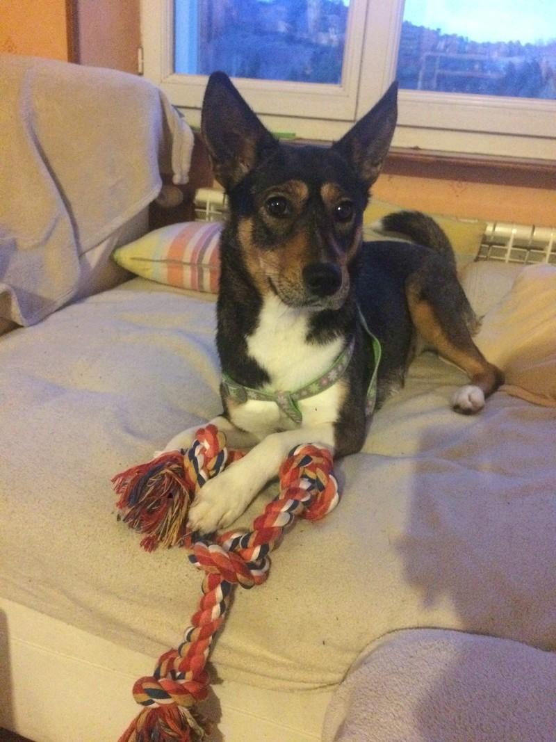 Rosabelle (chienne croisée husky) Img_2412