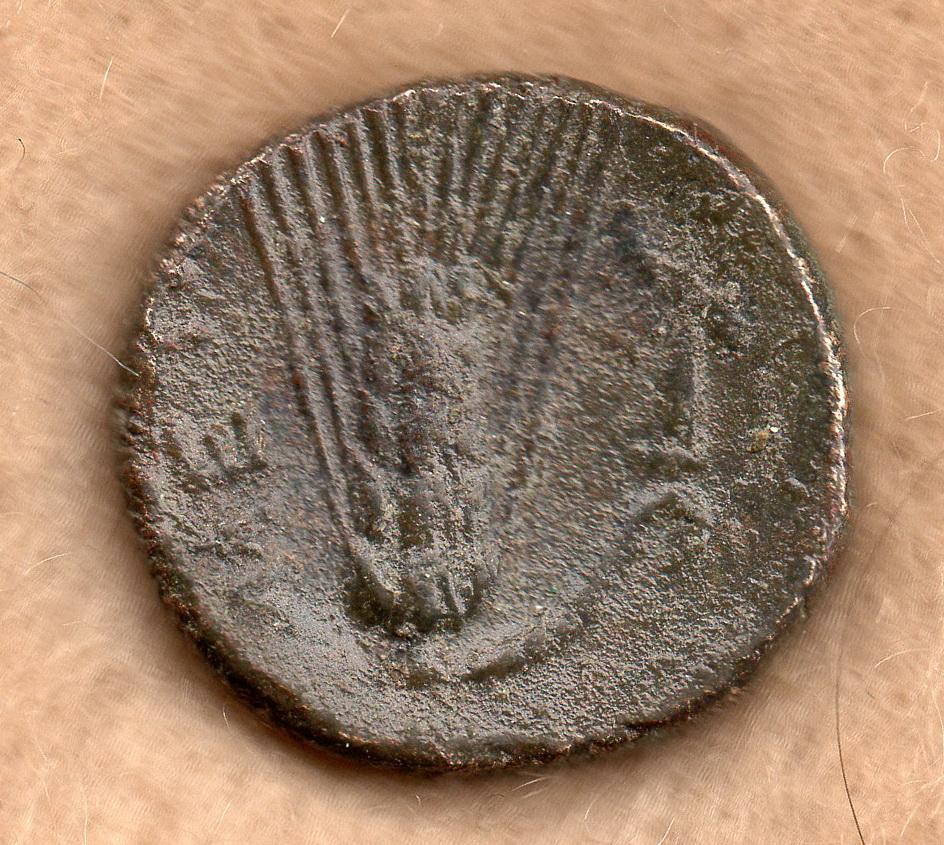 AE 15 de Metaponte, Lucania Rob_5912
