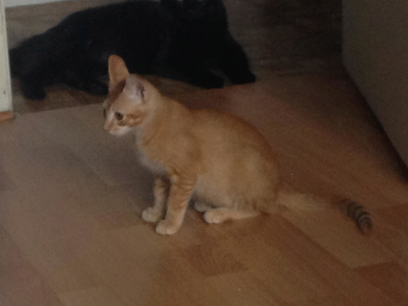 PERRY (Brooklyn) et GUSTAVE (Bham) 27835410