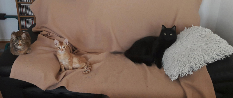PERRY (Brooklyn) et GUSTAVE (Bham) 27846611