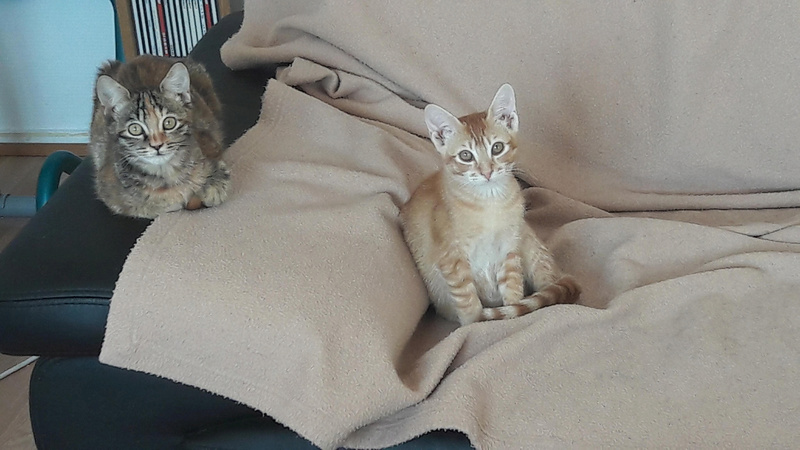 PERRY (Brooklyn) et GUSTAVE (Bham) 27951110