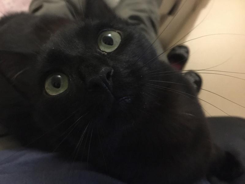 NYSSA, chatonne noire, née le 25/05/17 2018-013