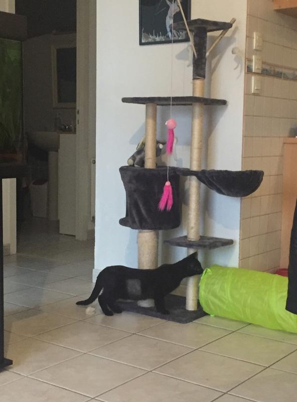 NYSSA, chatonne noire, née le 25/05/17 98e4dc10