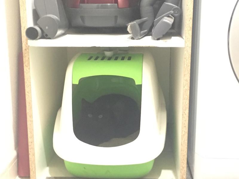 NYSSA, chatonne noire, née le 25/05/17 D0c02810