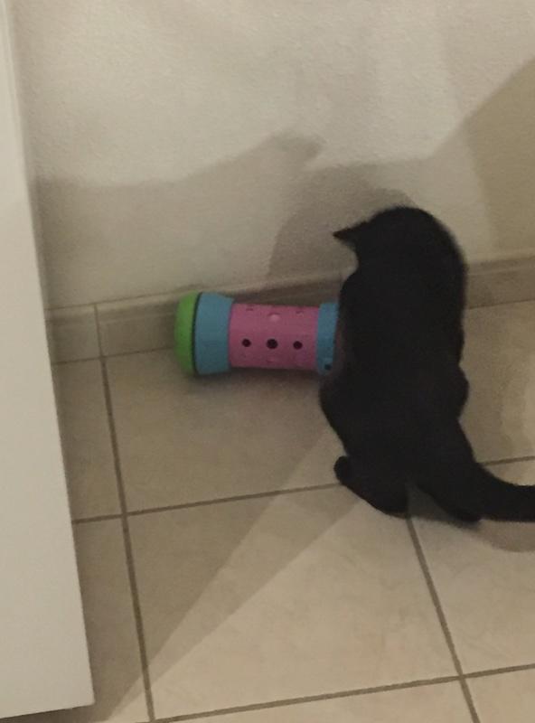 NYSSA, chatonne noire, née le 25/05/17 D3246910