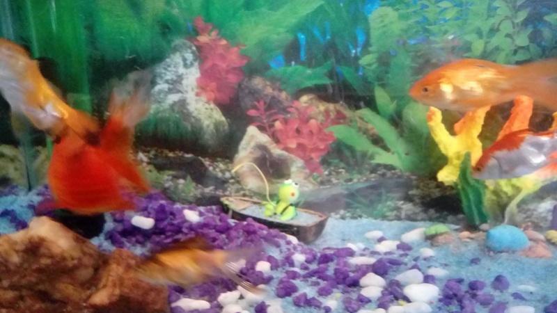 [Doença]  (PRINCIPIANTE) Peixes perdendo a cauda e morrendo 25139010