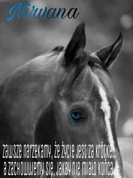 Niezapominajka - Page 3 Picsar16